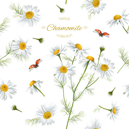 Vector chamomile flower seamless pattern with ladybug. Background design for herbal tea, natural cosmetics, health care products, aromatherapy, homeopathy. Best for print, wrapping paper Imagens - 66322751
