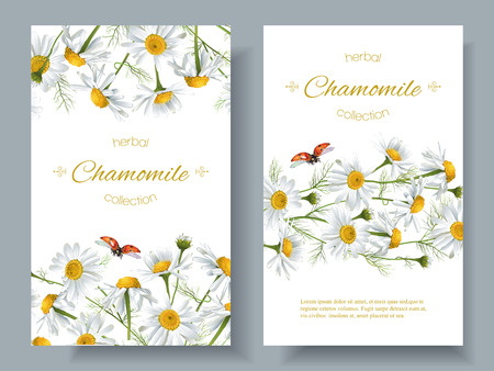 homeopathy: Vector chamomile flower banners with ladybug. Design for herbal tea, natural cosmetics, health care products, aromatherapy, homeopathy. Best for print, wrapping paper