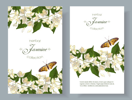 Vector jasmine flower banners. Design for tea, natural cosmetics, beauty store, organic health care products, perfume, essential oil, homeopathy, aromatherapy. With place for text. On white background Stok Fotoğraf - 66322849