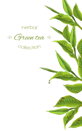 green tea with tea leaves and drops on white. Background design for packaging, tea shop, drink menu, homeopathy and health care products. Banco de Imagens - 68049271