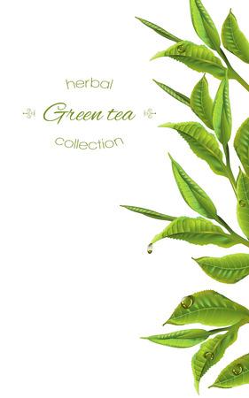 Tè verde con foglie di tè e gocce su bianco. Disegno di sfondo per il confezionamento, negozio di tè, menu di bevande, omeopatia e prodotti per la cura della salute. Archivio Fotografico - 68049271