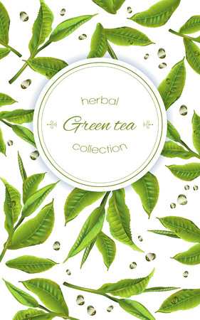 green tea with tea leaves and drops on white. Background design for packaging, tea shop, drink menu, homeopathy and health care products.