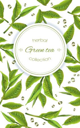 thé vert avec des feuilles de thé et gouttes sur blanc. Background design pour l'emballage, magasin de thé, menu de boissons, l'homéopathie et les produits de soins de santé.
