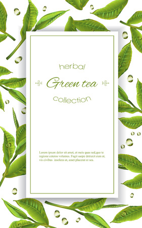 homeopathy: green tea with tea leaves and drops on white. Background design for packaging, tea shop, drink menu, homeopathy and health care products.
