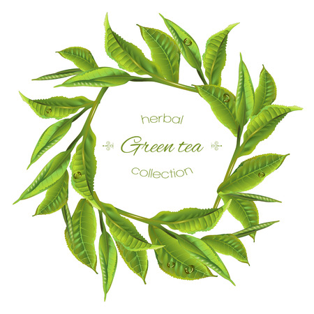 green tea leaves: green tea leaves round wreath on white background. Design for packaging, tea shop, drink menu, natural cosmetics, homeopathy and health care products. with place for text. Illustration