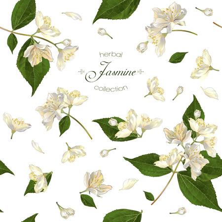 nahtlose Muster mit Jasminblüten. Entwurf für Tee, Aromatherapie, Kräuterkosmetik, ätherische Öle, Gesundheitspflegeprodukte, Parfüm. Kann als Hintergrund Hochzeit verwendet werden. Am besten für Geschenkpapier.