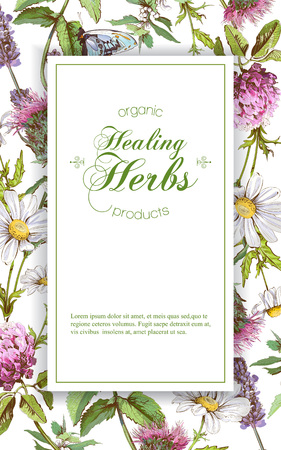 vertical wild flowers and herbs . Design for herbal tea, natural cosmetics, honey, perfume, health care products, homeopathy, aromatherapy. With place for text