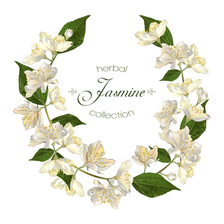 jasmine flowers wreath. Design for tea, natural cosmetics, beauty store, organic health care products, perfume, essential oil, aromatherapy. Can be used as greeting card or wedding invitation