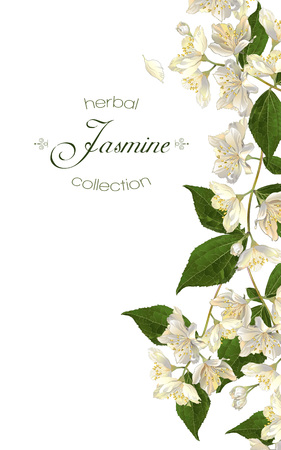 flores de jazmín. Diseño para el té, cosmética natural, tienda de belleza, productos para el cuidado de la salud orgánicos, perfumes, aceites esenciales, aromaterapia. Se puede utilizar como tarjeta de felicitación o invitación de la boda Ilustración de vector