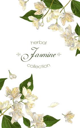 Jasminblüten. Entwurf für Tee, Naturkosmetik, Beauty-Shop, Bio-Gesundheitspflegeprodukte, Parfüm, ätherisches Öl, Aromatherapie. Kann als Grußkarte oder Hochzeitseinladung verwendet werden