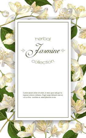 Flores de jazmín. Diseño para el té, cosmética natural, tienda de belleza, productos para el cuidado de la salud orgánicos, perfumes, aceites esenciales, aromaterapia. Se puede utilizar como tarjeta de felicitación o invitación de la boda Foto de archivo - 68049286