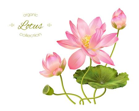Lotus realistische illustratie Stock Illustratie