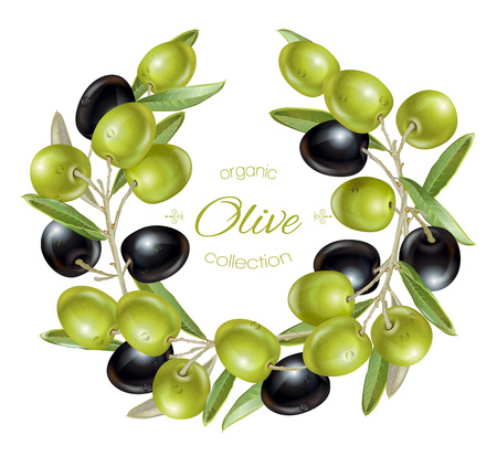 olive wreath: Olive wreath banners Illustration
