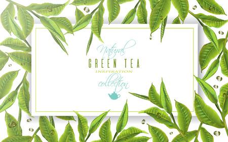 Green tea banner Illustration