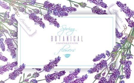 Lavender bloemen banner Stock Illustratie