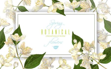 ベクトル ジャスミンの花、水平方向のバナーです。茶、自然化粧品、美容店、ヘルスケア製品、香水、エッセンシャル オイル、アロマセラピーのデ  イラスト・ベクター素材