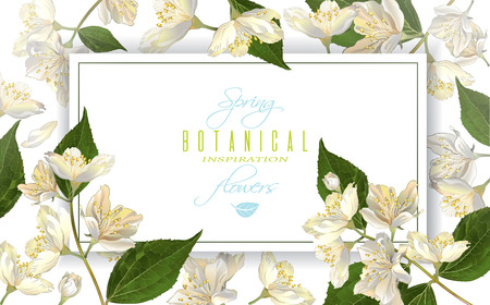 Vector jasmine flowers horizontal banner. Design for tea, natural cosmetics, beauty store, health care products, perfume, essential oil, aromatherapy. Can be used as greeting card, wedding invitation Фото со стока - 73381950