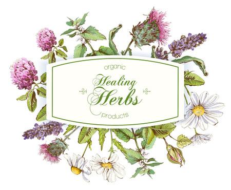 Vector herbal frame