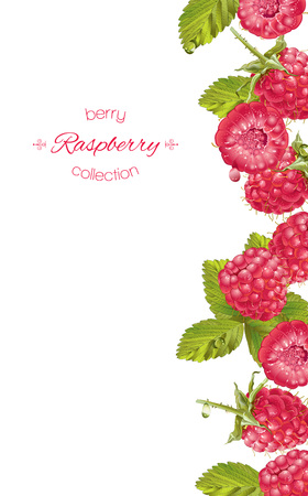 Raspberry vertical banner Illustration