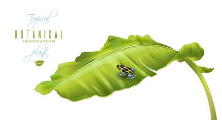 ranitomeya: Banana frog banner