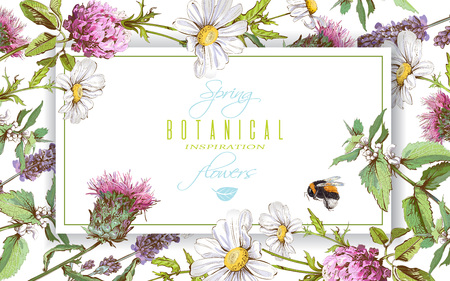 Herbal horizontal banner Illustration