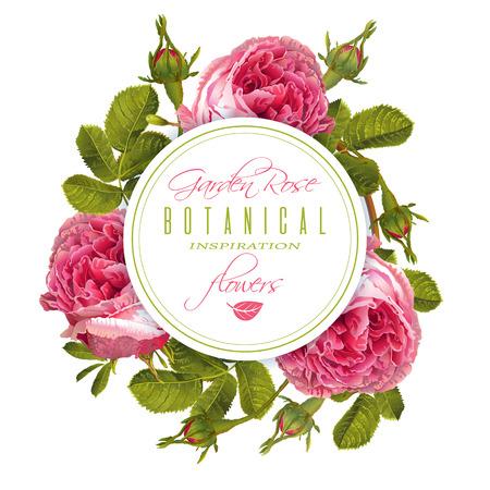 Rose round banner Illustration