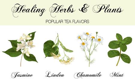 Ensemble de plantes de guérison Vecteurs