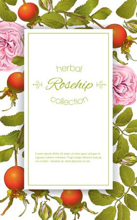 Rose hip vertical banner