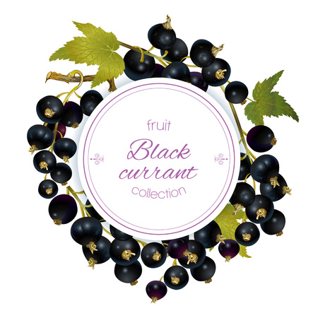 Vector black currant round banner on white background. Design for sweets and pastries filled with berry, dessert menu, natural cosmetics, health care products. With place for text Ilustracja