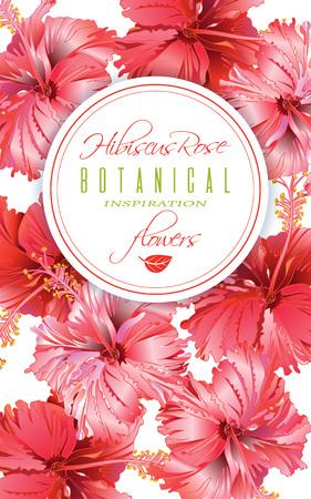 Hibiscus flor banner Foto de archivo - 79027273