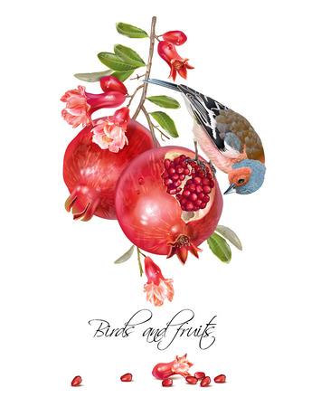 Finch granaatappel kaart Stock Illustratie
