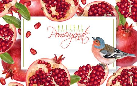 Pomegranate bird horizontal banner Ilustração