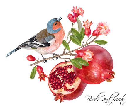 Finch pomegranate card Stock Illustratie