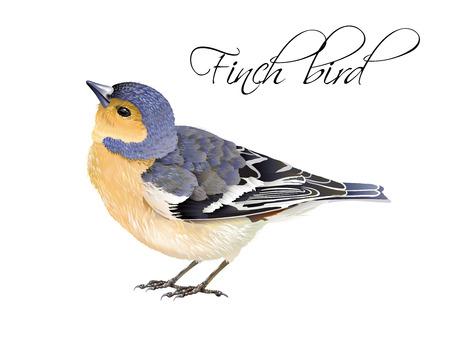 Finch bird illustration Reklamní fotografie - 83876616