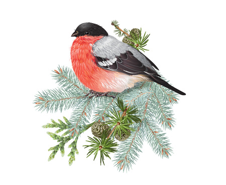 Bullfinch winter composition Stock Illustratie