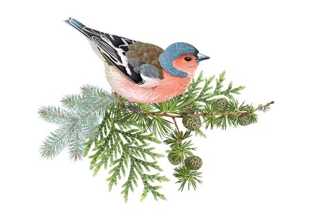 Finch winter composition