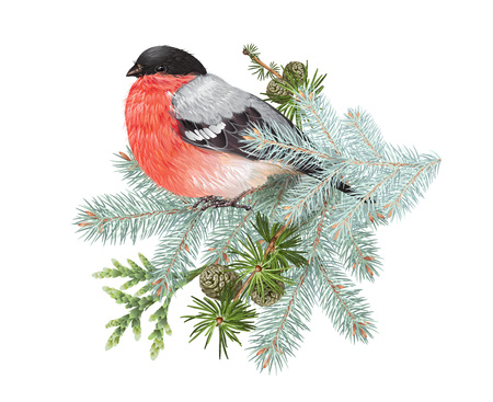 Bullfinch winter composition Illustration