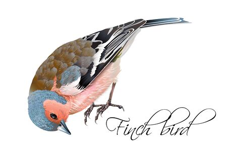 christmas greeting card: Finch bird illustration