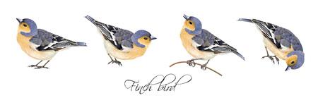 Finch bird illustrations set