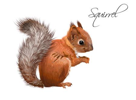 Ilustración realista de ardilla Ilustración de vector
