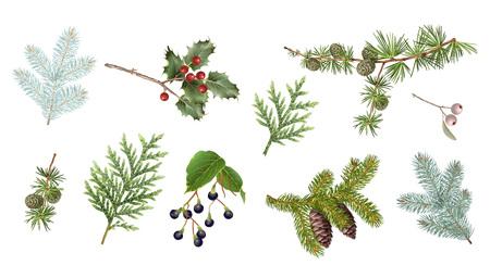 Winter Zweige gesetzt Vektorgrafik