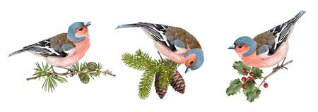 Finch birds set