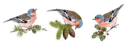 Set d'oiseaux Finch