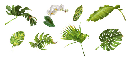 Tropical plants set Stock Illustratie