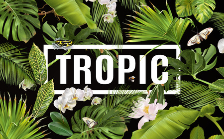 Tropic horizontal banner Stock Photo