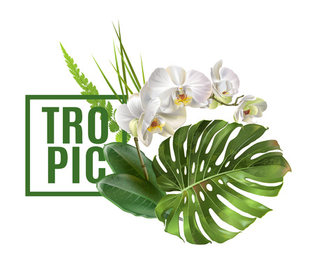 Tropic plants banner Vettoriali