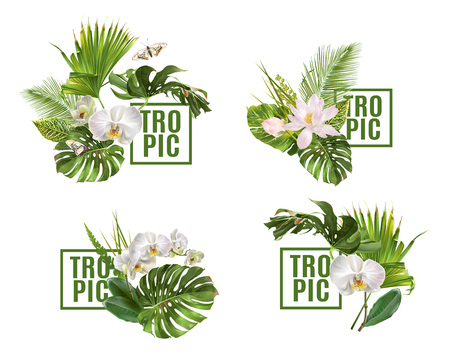 Ensemble de bannière de plantes tropicales Vecteurs