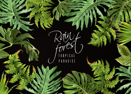 Rain forest banner  on plain background.