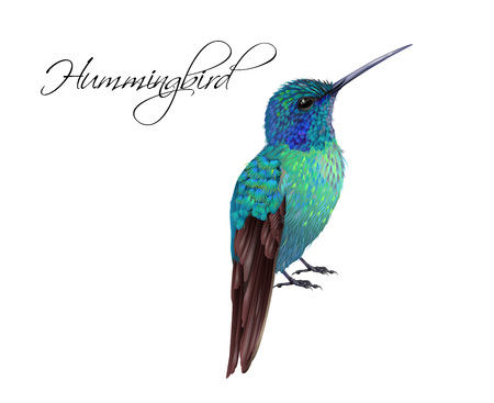 Hummingbird realistic illustration
