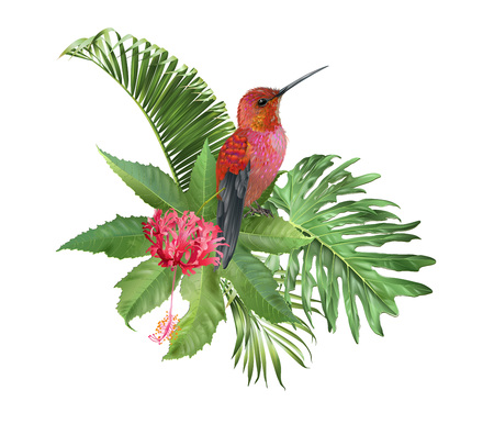 Hummingbird tropic arrangement Illustration